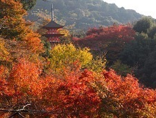 'Kyoto' from the web at 'http://www.japan-guide.com/blog/g/koyo15_151204_kyoto_t2.jpg'