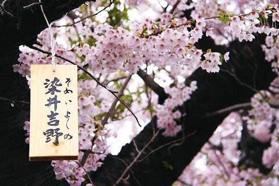 เทศกาลญีปุ่น