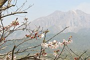 'Kagoshima' from the web at 'http://www.japan-guide.com/blog/g/sakura11_110401_kagoshima_t2.jpg'