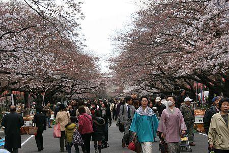 http://www.japan-guide.com/blog/g/sakura_090326_tokyo_04.jpg