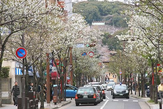 Francois Japan Blog: Cherry Blossom Report: Fukuoka