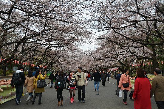 Ueno Park Autumn Walking Through Ueno Park