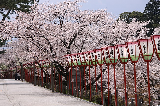 Cherry Blossom Forecast 2014 collection. During the save!buy ...