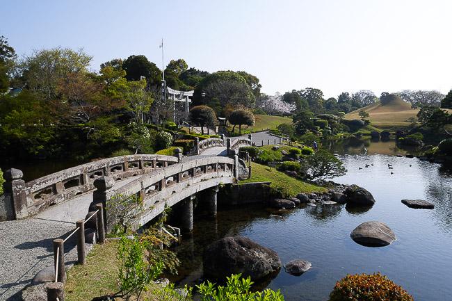 Cherry Blossoms 2014: Kumamoto Report (3/28)