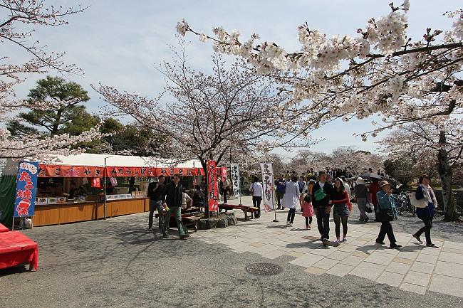 Kyoto Japan Cherry Blossom Festival