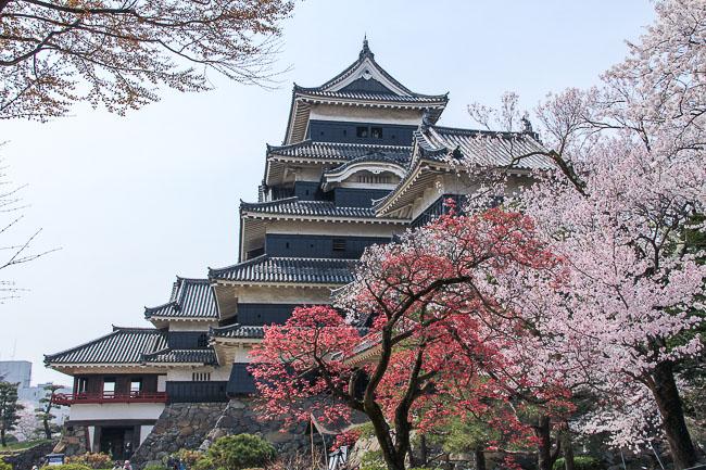 Cherry Blossoms 2014: Matsumoto Report (4/16)