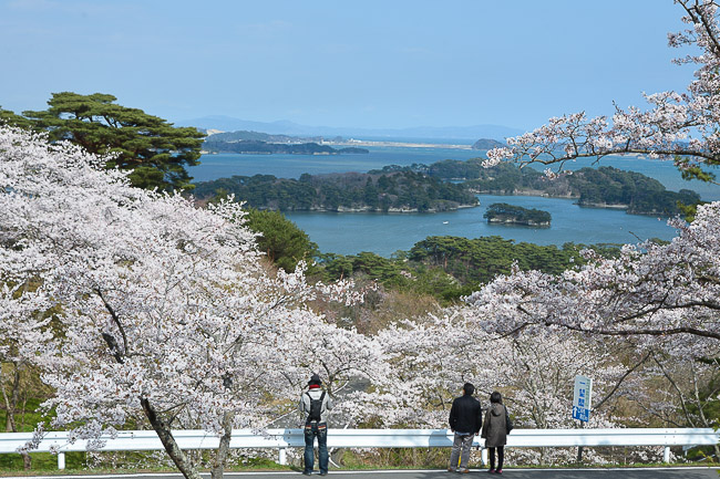 Sakura 2014 Forecast   LONG HAIRSTYLES