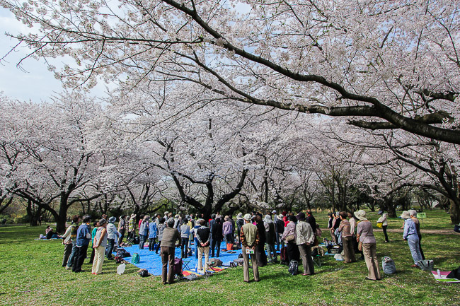 this chorus group gave   live performance under the flowers