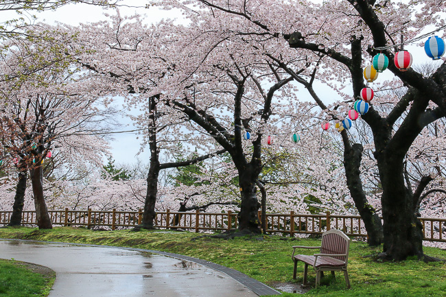 Cherry Blossom Reports 2016 - Hakodate: Full Bloom