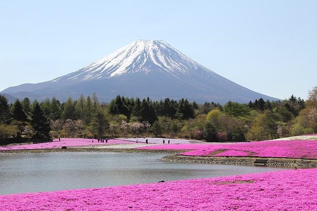 Japan Flower Festival Shibazakura Flower Festival of