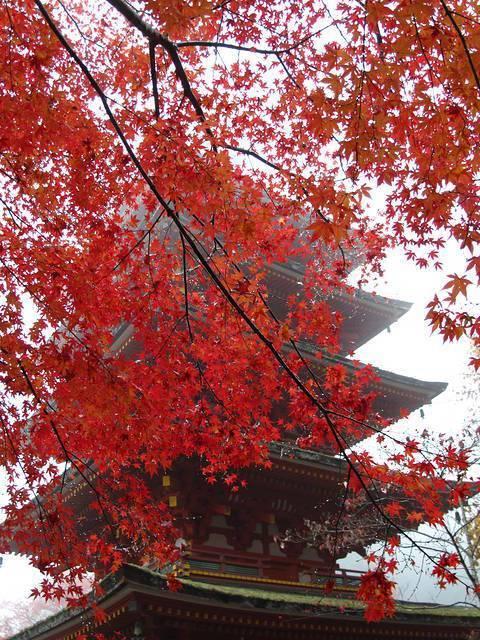 Japan Travel Reports Koyo 2014 Кyoto Nara November 23 29