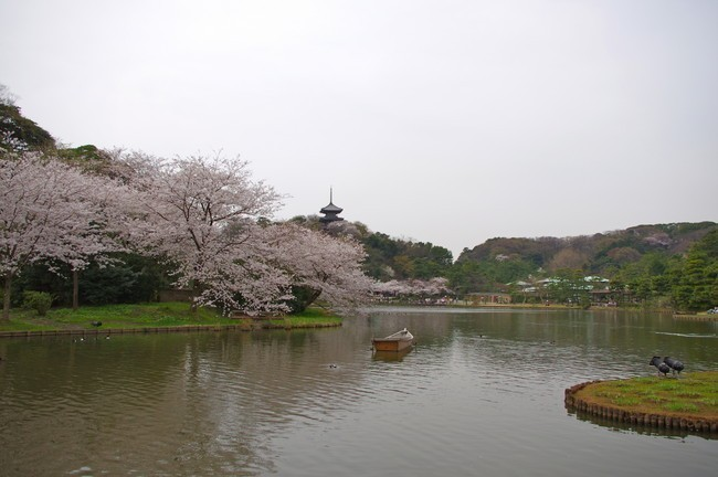 honmoku fishing park yokohama restaurant