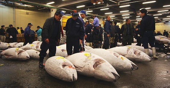 Tokyo travel tsukiji fish market for Japan fish market