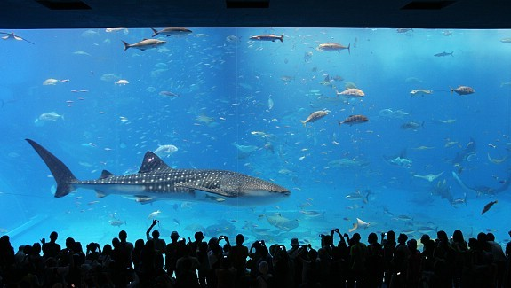 Okinawa Travel Churaumi Aquarium