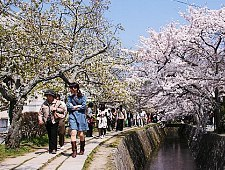 'Kyoto' from the web at 'http://www.japan-guide.com/g6/XYZeXYZe3906_225.jpg'