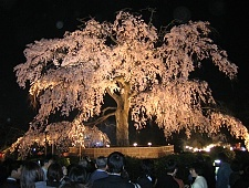 'Kyoto' from the web at 'http://www.japan-guide.com/g6/XYZeXYZe3925_225.jpg'