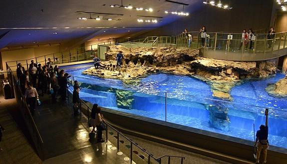Tokyo Travel Sumida Aquarium