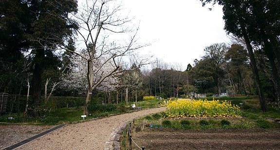 Manyo Botanical Garden, Nara