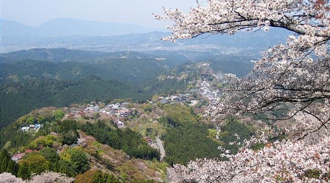 Yoshino Travel Mount Yoshinoyama Yoshinoyama Cherry Blossoms