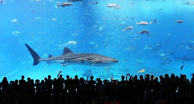 Aquariums In Japan
