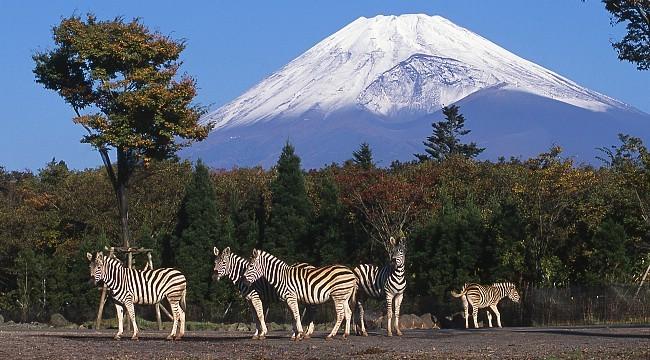 Картинки по запросу Fuji Safari Park