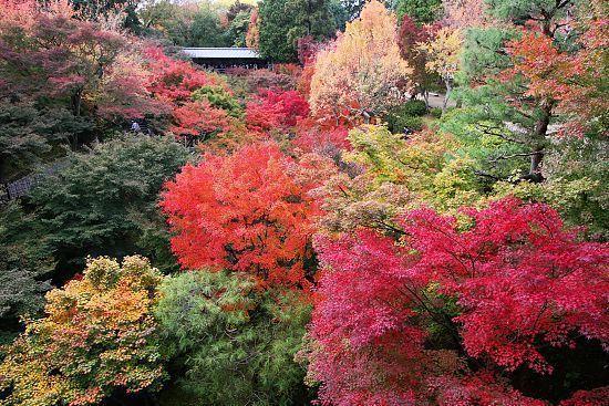 autumn color report 2009  kyoto