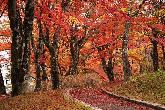 Autumn Color Report 2011 Fujigoko Report