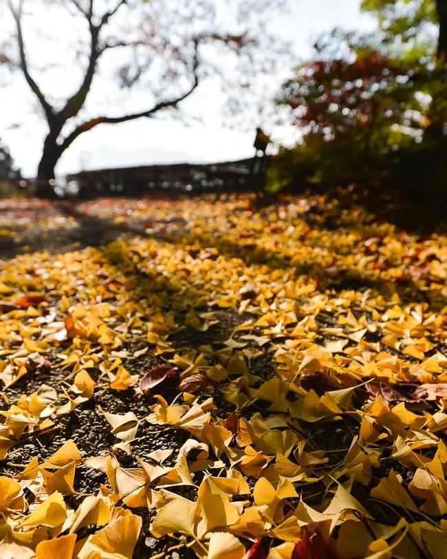 Autumn Color Report 2013 Fujigoko Report