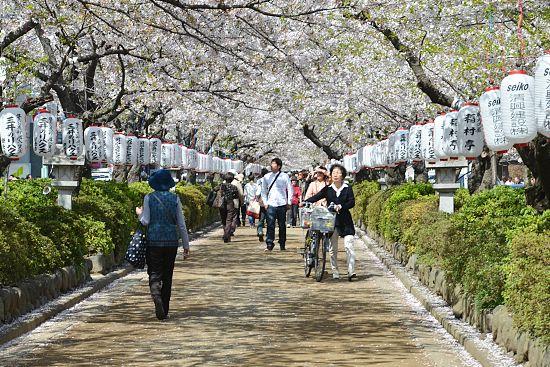 Kamakura Yokohama Tour