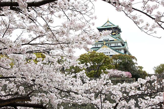 Cherry Blossom Reports 2016 - Osaka: Full Bloom