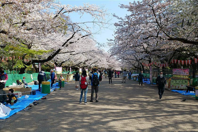 Cherry Blossom Reports 2019 Tokyo Petals Starting To Fall