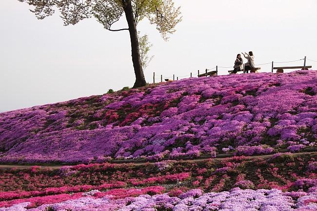 seans japan travel journal northern kanto flower report