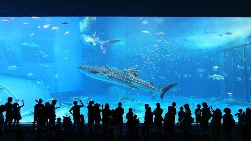 Hasil gambar untuk churaumi aquarium