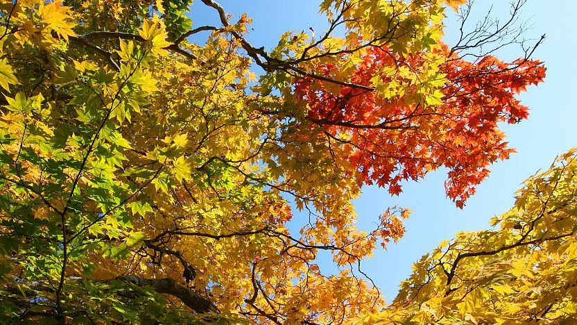 Autumn Leaves In Japan What Trees Turn Colors