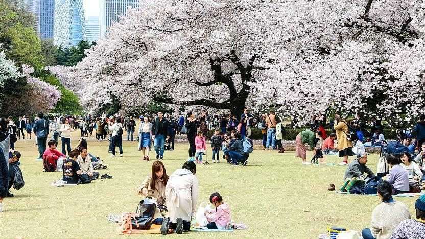 Image result for shinjuku gyoen