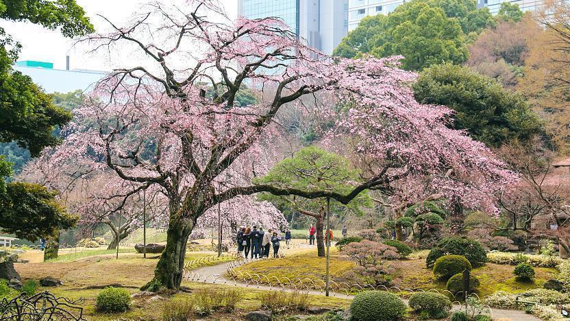 Hasil gambar untuk Koishikawa Korakuen Park