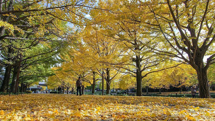 Tokyo Travel Showa Memorial Park Showa Kinen Koen