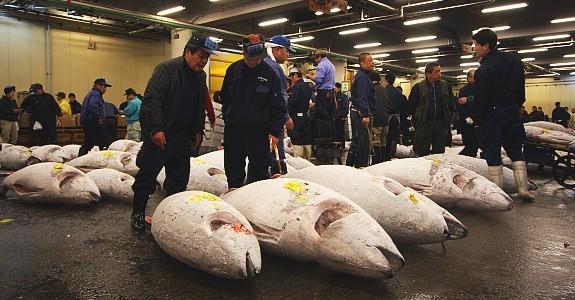 Image result for japan fish market