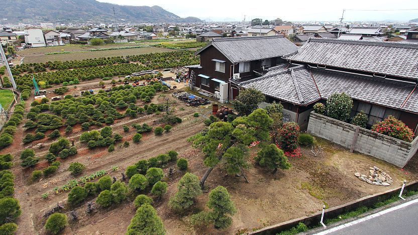 Bonsai Where To See Bonsai In Japan