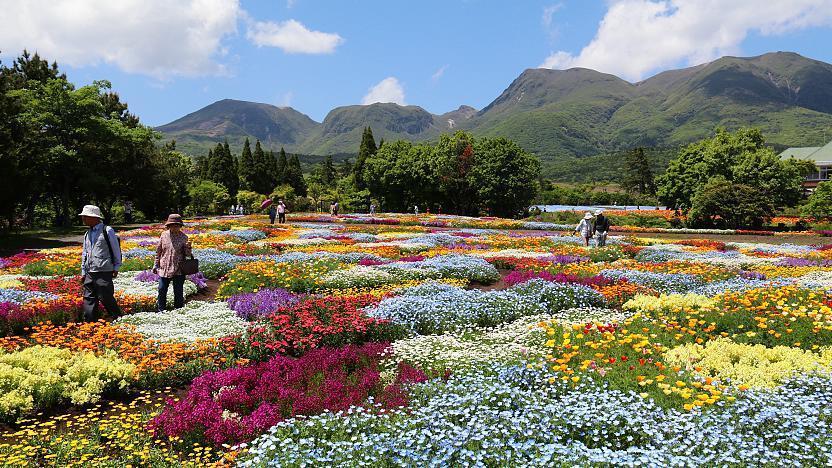 Kuju Travel Kuju Flower Park