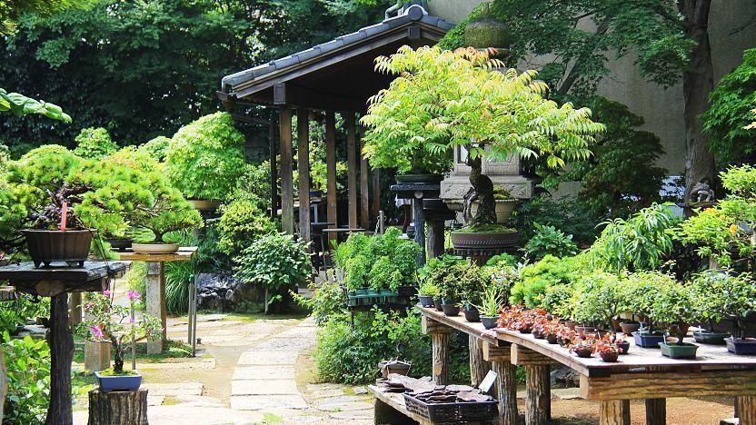 Saitama Travel Omiya Bonsai Village