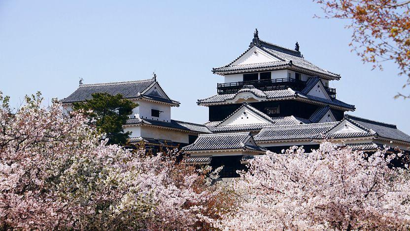 Matsuyama Travel Matsuyama Castle