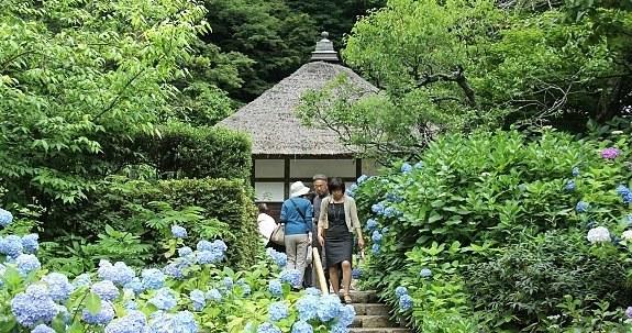 Kamakura Travel Meigetsuin Temple Ajisaidera