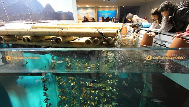 Miyajima Travel Aquarium