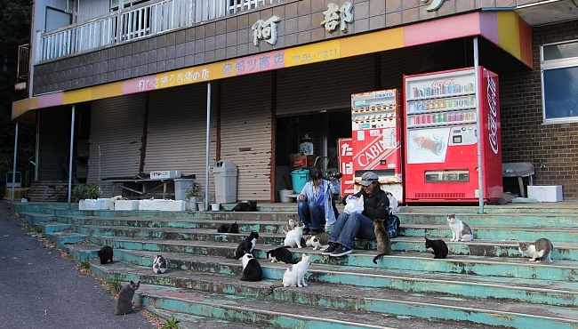 Sanriku Coast Travel Tashiro Island Tashirojima Cat Island