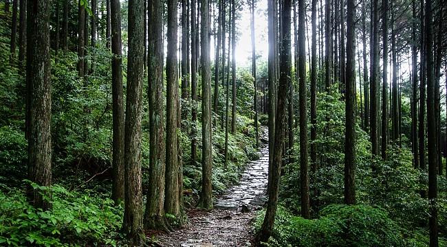 Kumano Travel Kumano Kodo Pilgrimage Trails