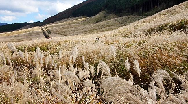 Hakone Travel Sengokuhara Pampas Grass Fields