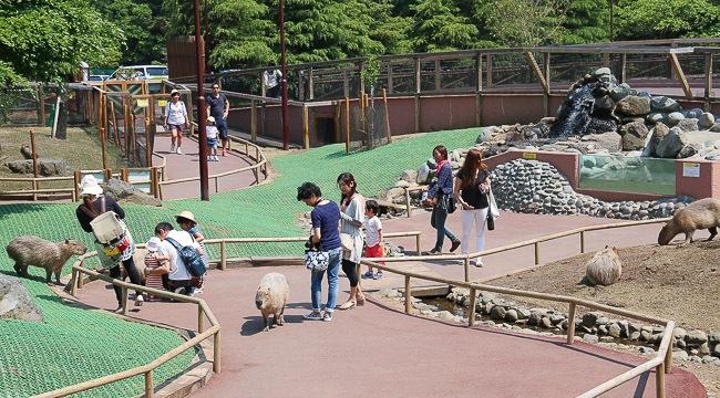 Fujinomiya Travel Fuji Safari Park