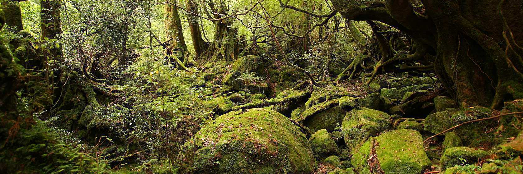 Yakushima Travel Guide