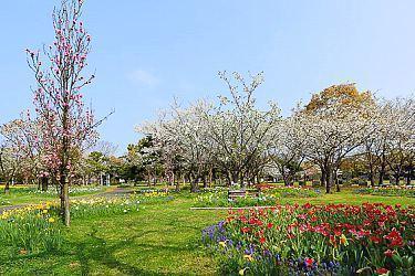 Fukuoka Travel Guide - What to do in Fukuoka
